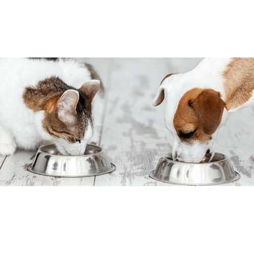 PET NUTRITION – What Should I Be Feeding My Pet?
