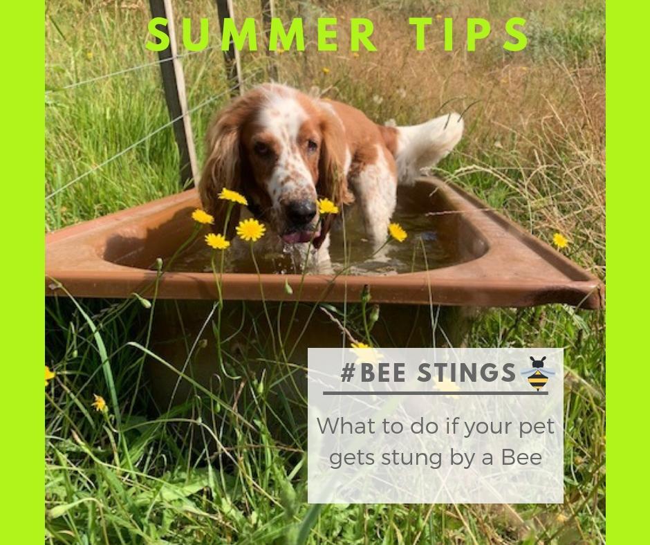 Summer Tips – Bee Stings