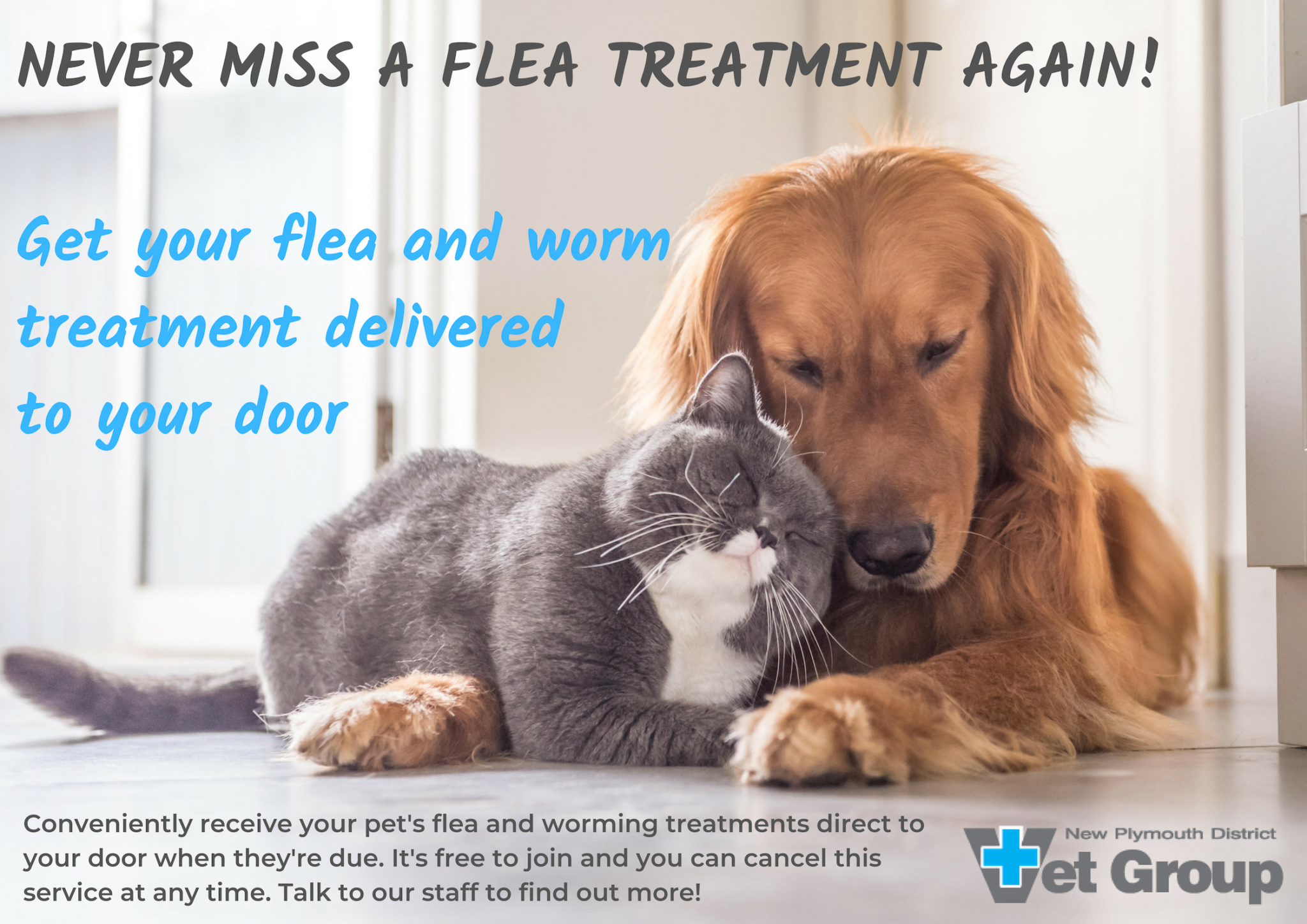Never Miss A Flea Treatment Again – Get Your Treatment Delivered!