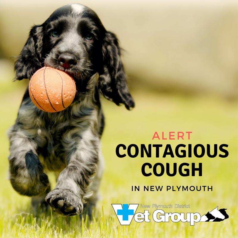 August Alert – Contagious Cough