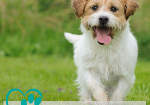 Canine Mobility Nurse Clinic