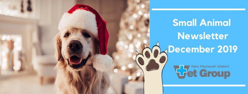 Small Animal Newsletter – December 2019