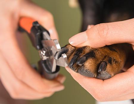 Pet Nail Clipping Service