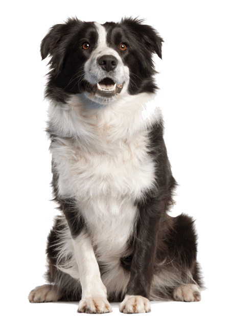 Could My Dog Have Arthritis?
