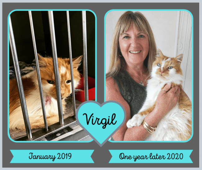 Rescued 'Virgil' Finds Happiness During His 9th Life
