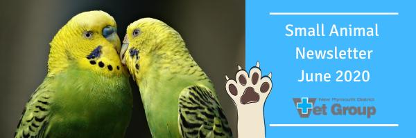 Small Animal Newsletter – June 2020