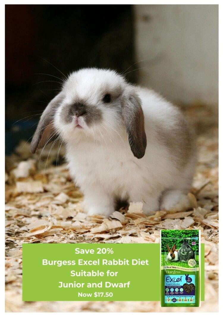 New Rabbit?