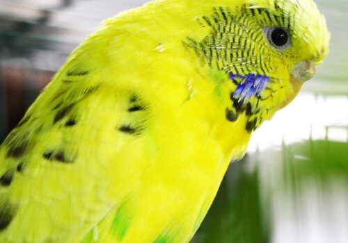 Wildlife Triage (Native Bird)