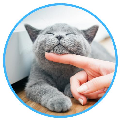 Conjunctivitis In Cats