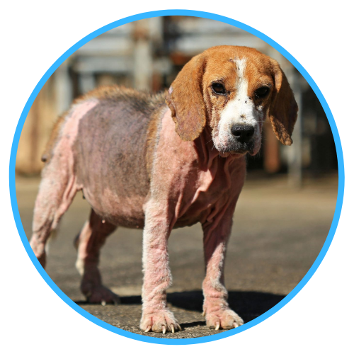 Demodex Treatment