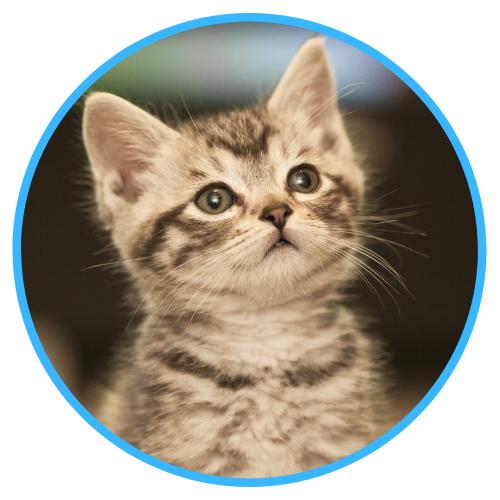 Kitten Healthcare