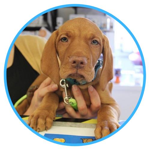 Puppy Healthcare 2