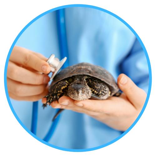 Turtle Illnesses