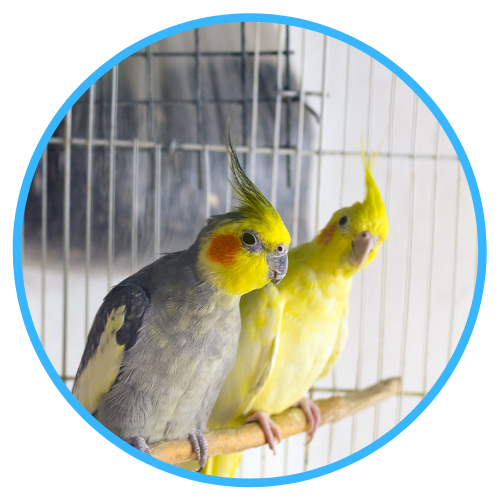 Transporting Your Bird
