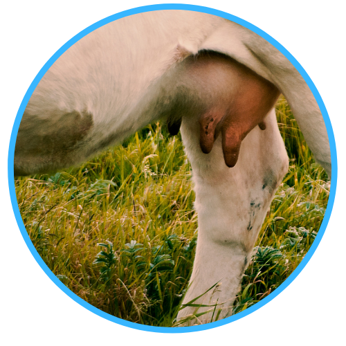 Best Practice Administration For Teatseal & Dry Cow Therapy
