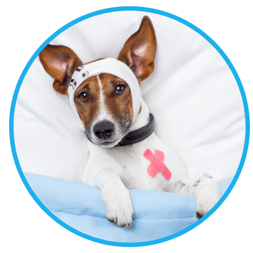 Rat Bait Poisoning In Dogs